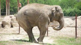Elephant walking in the zoo. Izmir - Turkey stock footage