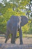 Elephant Warning Stock Photo