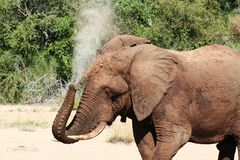 Elephant Washing Royalty Free Stock Photography