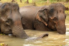 Elephant washing Royalty Free Stock Photography