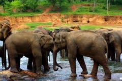 Elephant washing procedure Stock Photo