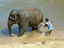 Elephant washing, Thailand Stock Photos