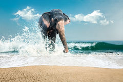 Elephant in water Royalty Free Stock Photos