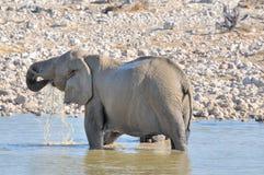 Elephant in the water, Etosha National park, Namibia stock image