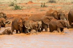 Elephant in water. National park of Kenya. Africa royalty free stock photo
