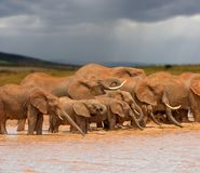 Elephant in water. National park of Kenya royalty free stock image