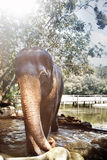 Elephant in the water place Royalty Free Stock Images