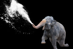 Elephant Water Spray in Black Background Royalty Free Stock Photos
