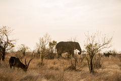 Elephant and Waterbuck. In the same landscape Royalty Free Stock Photography