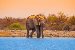 Elephant at waterhole Stock Image