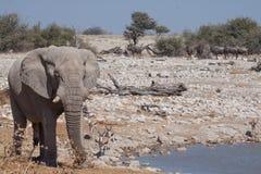 Elephant at waterhole Royalty Free Stock Photos