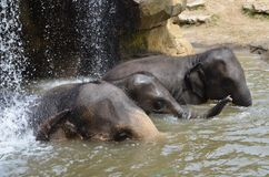 Elephant watering hole Stock Image