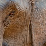 Elephant is wathing you Stock Photo