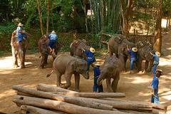 Elephant2. Where is a zoo of elephant. It is location at ChiangDao in Thailand stock image