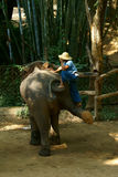 Elephant 5. Where is a zoo of elephant. It is location at ChiangDao in Thailand royalty free stock photos