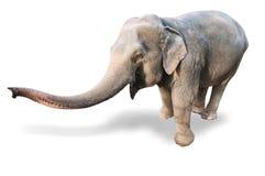Elephant on a white background Stock Photography