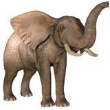 Elephant  on white Royalty Free Stock Images