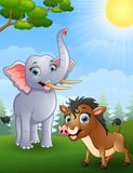 Elephant and wild boar cartoon in the jungle Stock Photo