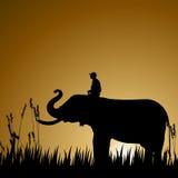 Elephant, wildlife. Silhouette of an elephant, wildlife Stock Image