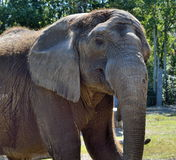 Elephant at wildlife reserve Stock Photos