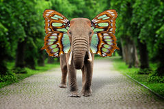 Free Elephant With Butterfly Wings Stock Images - 84178194