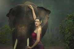 The elephant with woman. In traditional dress stock photo