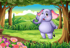 An elephant at the woods Stock Image