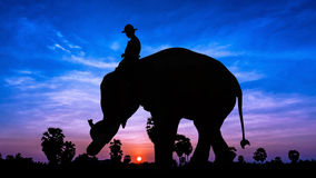 Elephant work on twilight time Stock Photography