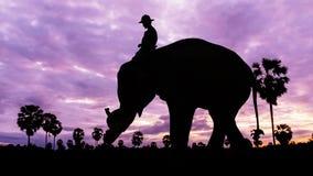 Elephant work on twilight time Royalty Free Stock Images