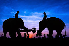 Elephant work on twilight time Stock Photos