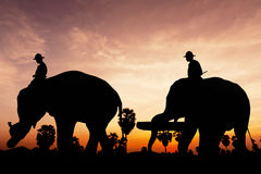 Elephant work on twilight time. In Thailand Asia royalty free stock photo