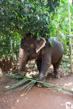 Elephant working Royalty Free Stock Image