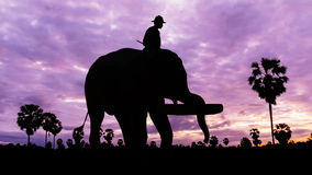 Elephant working on twilight time Stock Photo