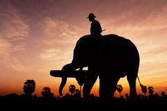 Elephant working on twilight time Royalty Free Stock Images