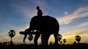 Elephant working on twilight time Royalty Free Stock Photography