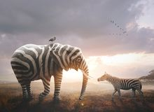 Elephant with zebra stripes. A surreal image of an African elephant wearing black and white zebra stripes royalty free stock photography