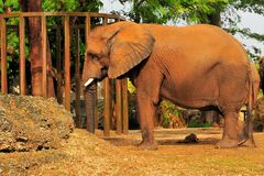 Elephant In a Zoo Stock Images