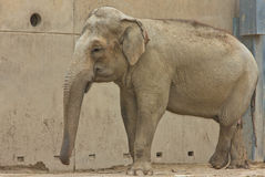 Elephant zoo african animal zoological Stock Photo