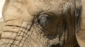 An elephant. In Zoo in central bohemia Stock Photo