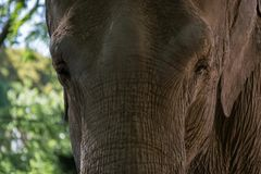 Elephant in zoo stock photography