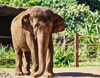 Elephant zoo stock photos