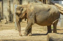 Elephant at zoo Stock Photos