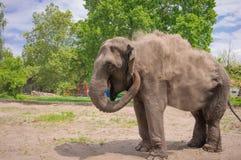 Elephant. In a zoo, Palic Lake, Subotica, Serbia Stock Image