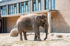 Elephant in the zoo Royalty Free Stock Images