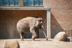 Elephant in the zoo Stock Image
