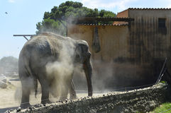 The elephant Stock Images