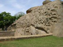 Elephantana Krzywy Obrazy Royalty Free