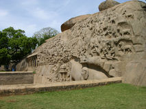 Elephantana kurvor Royaltyfria Bilder