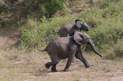 Elephants royalty free stock photography