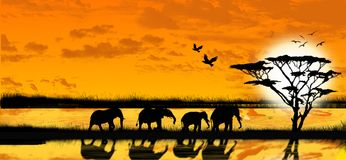 Elephants. An illustration of elephants whit a sunset Stock Photography